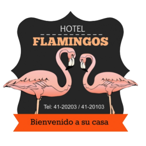 flamingos copia